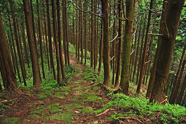 Kumano Kodo o Camino de Kumano