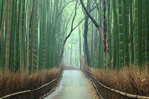 Bosque de Arashiyama, Kioto